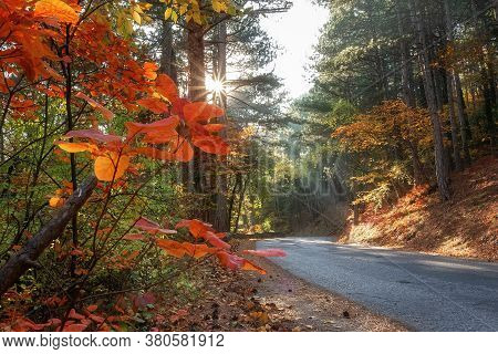 Beautiful Autumn Forest. Autumn Forest Road Landscape. View Of The Autumn Forest Road. Autumn Leaves