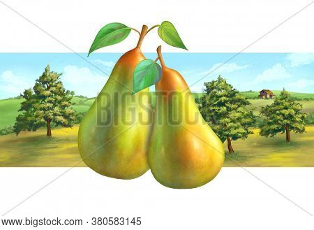 Pear orchard and rural landscape, suitable for label designs. Digital illustration,.