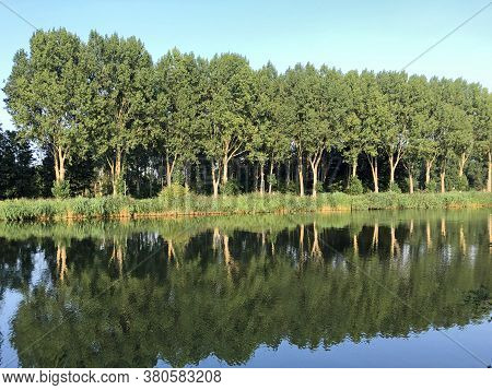 Trees Reflecting In Channel The 'hoge Vaart' In The Dutch City Of Almere.