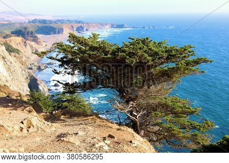 Cypress Tree On A Bluff Overlooking The Pacific Ocean And The Central California Coast Taken In Big