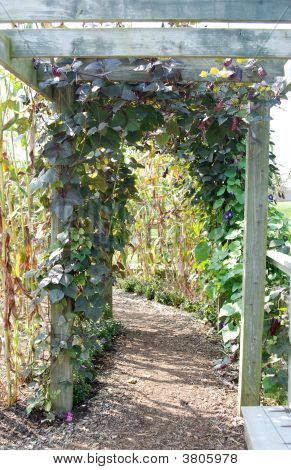 Walkway With Vines
