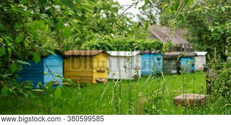 Colorful Wooden Beehives Stand In Country House Garden On Green Grass Among Trees On Nasty Summer Da