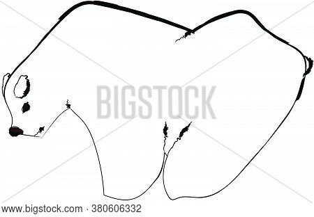 Flat Doodle Drawing Image Of Polar Bear, Vector Illustration