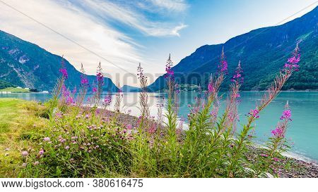 View On Beautiful Sognefjord With Flowers In The Front During Blue Hour From Skjolden Sogn Og Fjorda