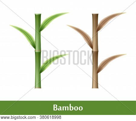 Set Of Vector Bamboo Icons. Brown And Green Bamboo Stems And Leaves