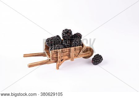 Blackberries In The Antique Barrow On The White Background.