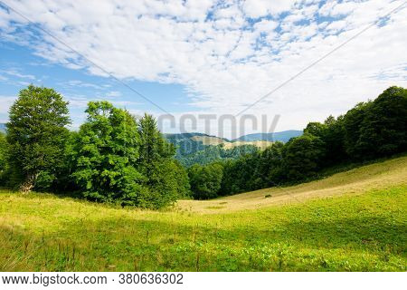 Beech Tree On The Green Alpine Meadow. Carpathian Mountain Landscape In Summertime. Wonderful Sunny