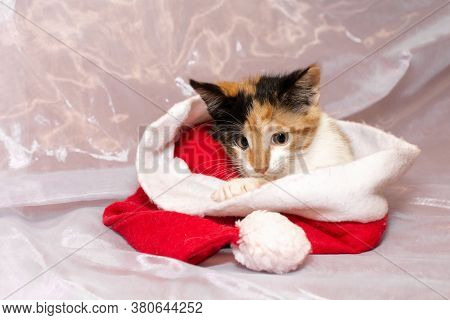 Tricolor Kitten From The Shelter Lies Under Santas Hat On A White Background. It Looks Scared And Sa
