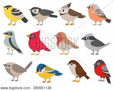 Cute Birds. Hand Drawn Little Colorful Birds, Animals Characters For Print Card, Garden Decoration.