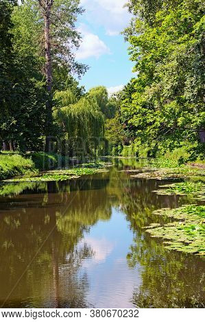 Picturesque Landscape View Of Pond With Lily Pads On The Surface And Old Trees And Bushes Along The