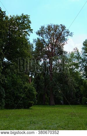 Scenic Nature Landscape With Different Old Trees And Grass With Wild Blooming Flowers In The Foregro