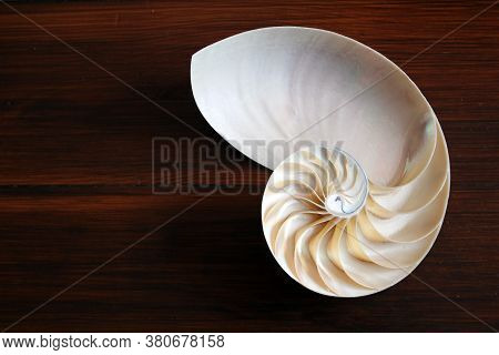 Nautilus Shell With Copy Space Wood Wooden Background Cross Section Symmetry Fibonacci Spiral Sequen