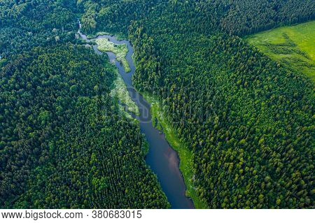 Aerial view of the pond in coniferous forest
