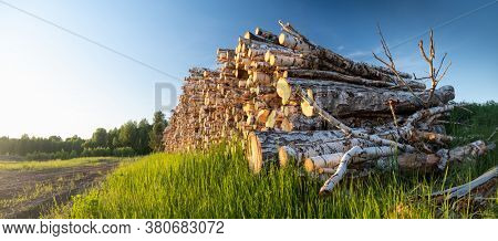 Cut logs on the green meadow in the forest