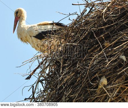 Stork In The Nest And Next To The Neighbors Sparrows.
