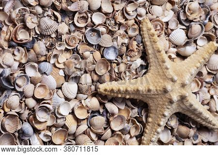 Starfish On The Background Of Broken Shell