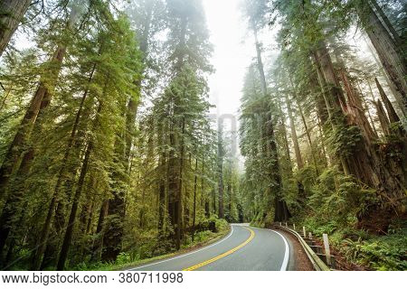 Redwood Highway in Northern California, United States