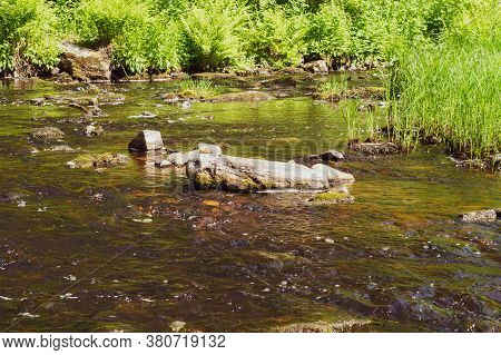 River In The Forest. Rocky Watercourse. Water Flow. Woodland Creek. Brook On A Summer Day