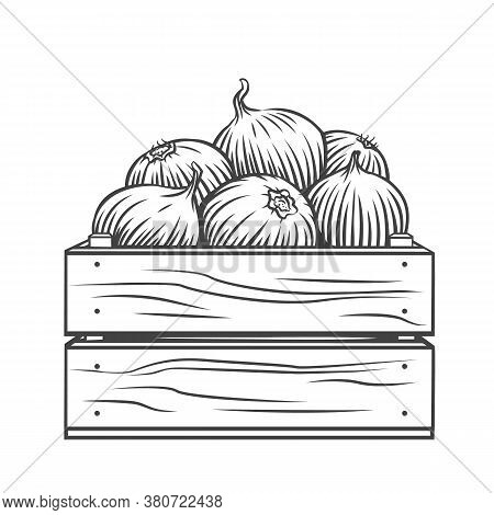 Pile Of Onion Bulbs In Wooden Crate Engraved Vector Illustration. Hand Drawn Harvest Of Onion Vegeta