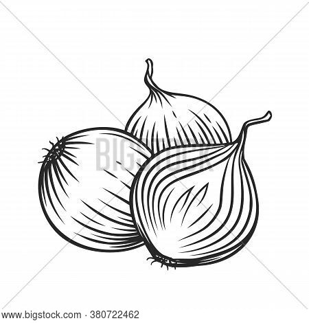 Whole And Half Red Onion Bulbs Engraved Vector Illustration. Pile Of Drawn Onion.