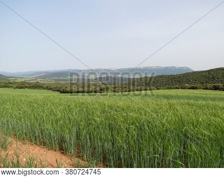 Agricultural Landscape With Green Wheat Fields And Arable Land In Sunny Summer Day, Navarra, Spain