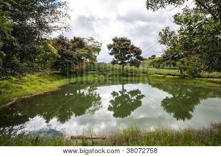 Tam Chau Tee Hill