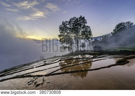 Terraced Rice Field Landscape With Road And Big Tree In Choan Then, Y Ty, Bat Xat
