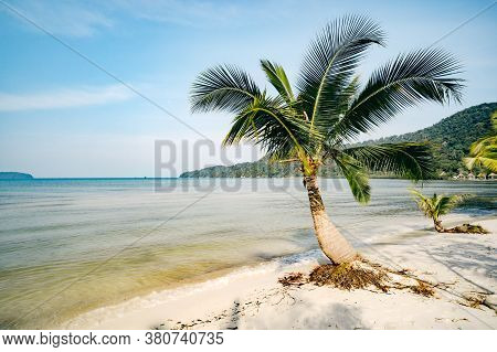 Beautiful Landscape With Big Green Palm Trees In The Foreground To The Background Of Tourist Umbrell