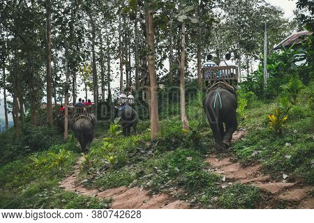 Tourists Riding Elephants In Wild Forest, On River And At Elephant Park. People Sitting On Elephants