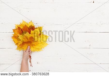 Many Colored Maple Leaves In Womans Hands Against The Background Of A White Textured Wooden Table. A