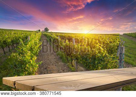 Vineyard Tabletop Design. Wine Background. Autumn Design With Vineyard And Empty Display. Autumn Gra