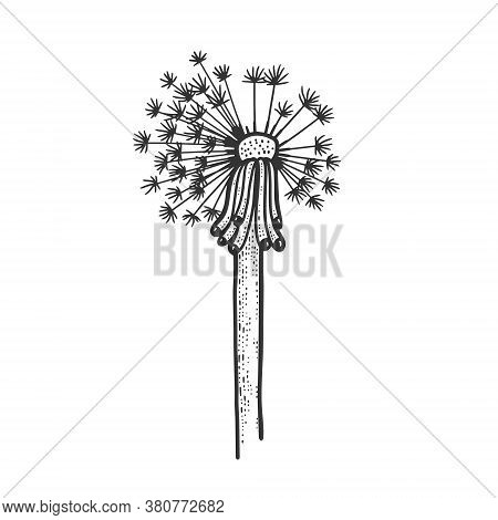 Dandelion Flower Plant Sketch Engraving Vector Illustration. T-shirt Apparel Print Design. Scratch B