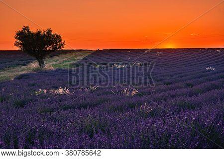 Valensole Plateau, Provence, Southern France. Lavender Field At Sunset