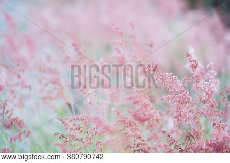Soft Focus Of Blown Flowers Field In Summer.scenery View Of Beautiful Wildflower Field In Morning.pi