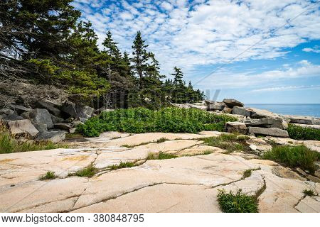 Trees And Granite Rock At Schoodic Point In Acadia National Park In Maine