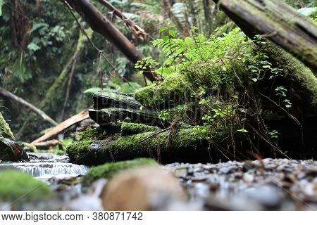 Babbling Brook, Water Running From A Waterfall Over Mossy Rocks, Fallen Trees And Ferns, The Otways,