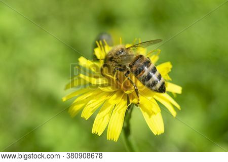 Macro Shot Colorful Flower With A Bee. Agriculture Concept Design. Beautiful Flower In Tropical Gard