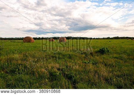 Hay. Collection Of Dry Grass. Process Of Collecting Straw. Bales Of Fat Lie On The Field. Agricultur