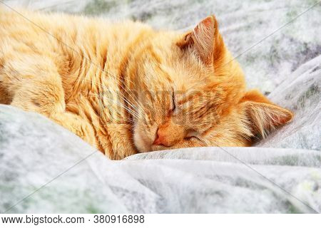 The Ginger Cat Is Sleeping On The Street. A Pet. Cat Close Up