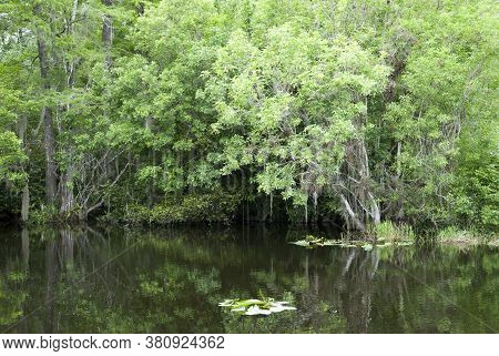 Calm Waters With Reflections Inside Everglades National Park (florida).