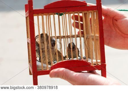 Finches In A Cage - Released For Good Luck At A Thai Temple