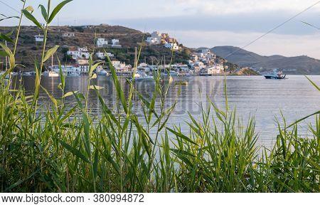 View Through Green Reed Plants Of Kea Island, Tzia, Greece.