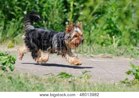 Dog Runs Outdoors