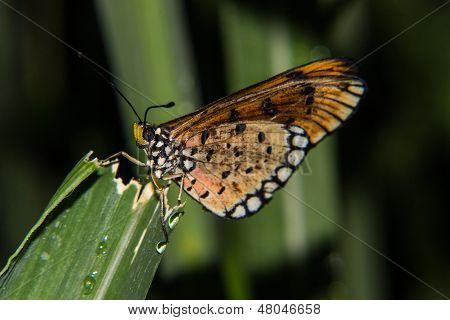 Butterfly In Green Leaves