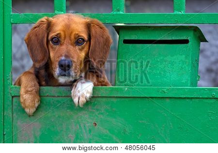 Small Dog Behind The Gate
