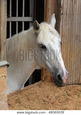 Beautiful horse looking over a wooden barn