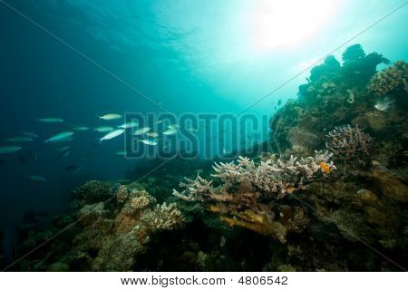 ocean coral sun and fish taken in the red sea. poster