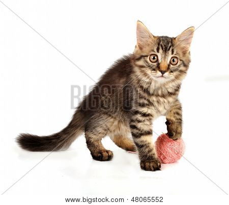 Cute little 3 months old kitten playing with a wool ball. Studio shot. poster