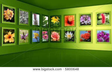 Концепция цветок фотография Галерея выставочный зал