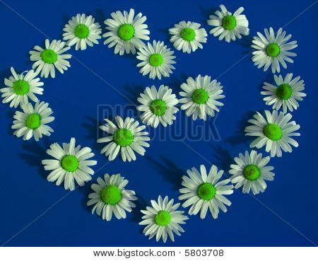 Heart of camomile on bright blue background